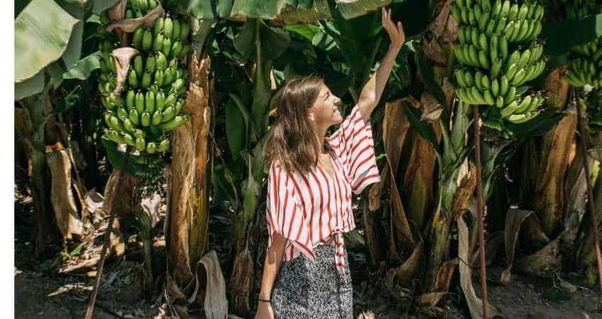 organic banana farm